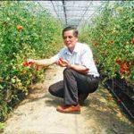 大溪亞蔬番茄園 開放採果