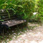 苗栗休閒農場 石中臼香草庭園