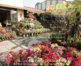 台南 群芳園藝