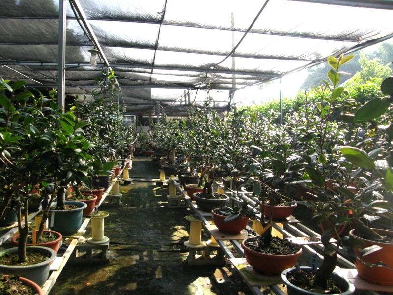 台中市石岡區---湧椿茶花園