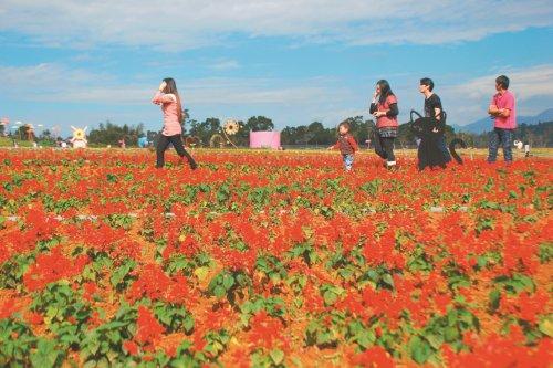 南投花卉嘉年華會---畫面構圖很好取景