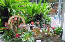 科博館植物園聖誕節花藝特展